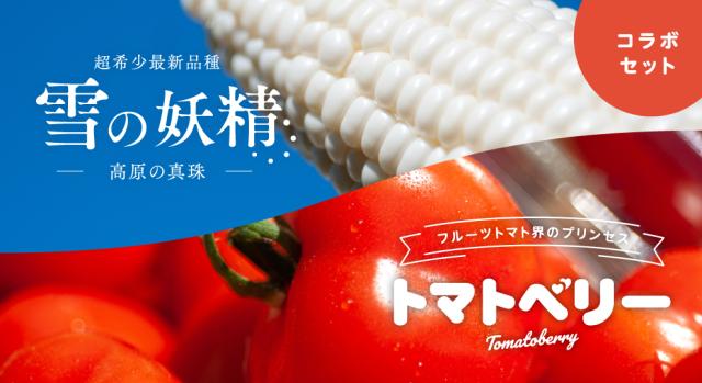 【陛下献上の品】トミーファームスペシャル!とうもろこし高原の真珠10本プラストマトベリー500グラムセット 7月下旬より出荷開始