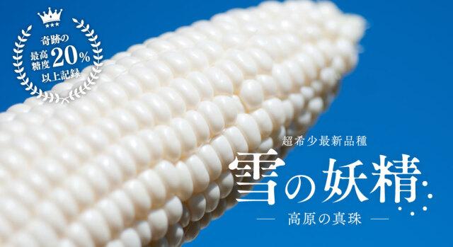 【陛下献上の品】高原の真珠と呼ばれる超最新ホワイトとうもろこし「雪の妖精」2Lサイズ以上保証!20本入り送料込 7月下旬より出荷開始
