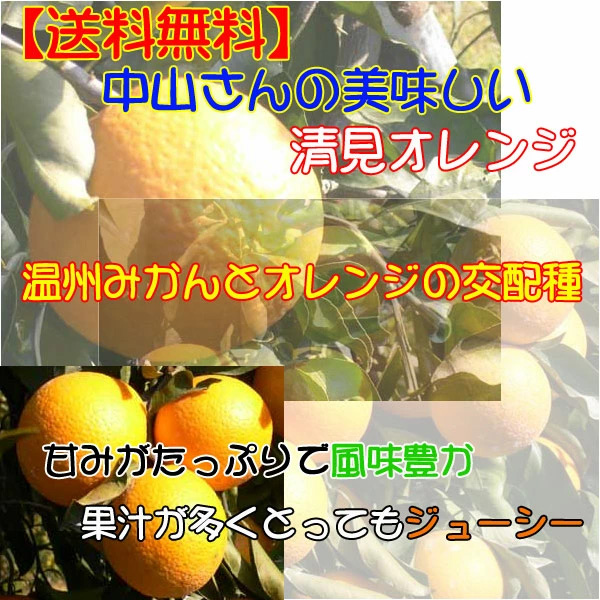 中山さんの清見オレンジ