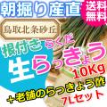 らっきょうとラッキョウ酢セット|鳥取北条砂丘から朝掘りしたらくだらっきょう10kgと老舗のらっきょう酢7L|根付き||砂付き|土付き|送料無料|通販|お取り寄せ