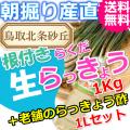 らっきょうとラッキョウ酢セット|鳥取北条砂丘から朝掘りしたらくだらっきょう1kgと老舗のらっきょう酢1L|根付き||砂付き|土付き|送料無料|通販|お取り寄せ