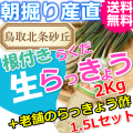 らっきょうとラッキョウ酢セット|鳥取北条砂丘から朝掘りしたらくだらっきょう2kgと老舗のらっきょう酢1.5L|根付き||砂付き|土付き|送料無料|通販|お取り寄せ