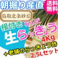 らっきょうとラッキョウ酢セット|鳥取北条砂丘から朝掘りしたらくだらっきょう4kgと老舗のらっきょう酢3L|根付き||砂付き|土付き|送料無料|通販|お取り寄せ