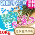 らっきょう|ラッキョウ|鳥取北条砂丘から朝掘り直送|シャキシャキらくだらっきょう10kg|根付き||砂付き|土付き|送料無料|通販|お取り寄せ