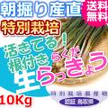 鳥取北条砂丘の特別栽培らくだらっきょう 10kg(送料無料 特産品 ご当地グルメ ご贈答品)