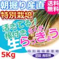 鳥取北条砂丘の特別栽培らくだらっきょう 5kg(送料無料 特産品 ご当地グルメ ご贈答品)