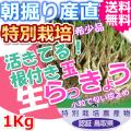 鳥取北条砂丘の特別栽培パリパリ玉らっきょう 1kg(送料無料 特産品 ご当地グルメ ご贈答品)
