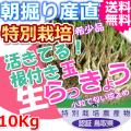 鳥取北条砂丘の特別栽培パリパリ玉らっきょう 10kg(送料無料 特産品 ご当地グルメ ご贈答品)