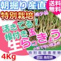 鳥取北条砂丘の特別栽培パリパリ玉らっきょう 4kg(送料無料 特産品 ご当地グルメ ご贈答品)