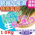 鳥取北条砂丘の特別栽培葉付きらくだらっきょう 10kg(送料無料 特産品 ご当地グルメ ご贈答品)