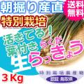 鳥取北条砂丘の特別栽培葉付きらくだらっきょう 3kg(送料無料 特産品 ご当地グルメ ご贈答品)