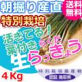 鳥取北条砂丘の特別栽培葉付きらくだらっきょう 4kg(送料無料 特産品 ご当地グルメ ご贈答品)