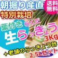 鳥取特別栽培らくだらっきょう3kgと老舗のらっきょう酢2.5Lセット (送料無料 特産品 ご当地グルメ ご贈答品)