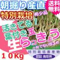 鳥取北条砂丘の特別栽培葉付きパリパリ玉らっきょう 10kg(送料無料 特産品 ご当地グルメ ご贈答品)