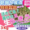 鳥取北条砂丘の特別栽培葉付きパリパリ玉らっきょう 3kg(送料無料 特産品 ご当地グルメ ご贈答品)