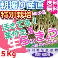 鳥取北条砂丘の特別栽培葉付きパリパリ玉らっきょう 5kg(送料無料 特産品 ご当地グルメ ご贈答品)