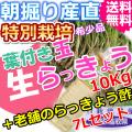 鳥取北条砂丘の特別栽培葉付き玉らっきょう10kgと老舗のらっきょう酢7Lセット (送料無料 特産品 ご当地グルメ ご贈答品)