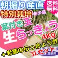 鳥取北条砂丘の特別栽培葉付き玉らっきょう4kgと老舗のらっきょう酢3Lセット (送料無料 特産品 ご当地グルメ ご贈答品)