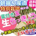 鳥取北条砂丘の特別栽培葉付き玉らっきょう5kgと老舗のらっきょう酢3.5Lセット (送料無料 特産品 ご当地グルメ ご贈答品)
