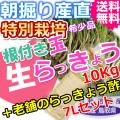 鳥取北条砂丘の特別栽培玉らっきょう10kgと老舗のらっきょう酢7Lセット (送料無料 特産品 ご当地グルメ ご贈答品)
