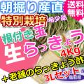 鳥取北条砂丘の特別栽培玉らっきょう4kgと老舗のらっきょう酢3Lセット (送料無料 特産品 ご当地グルメ ご贈答品)