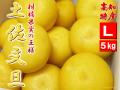 16土佐文旦5キロL4