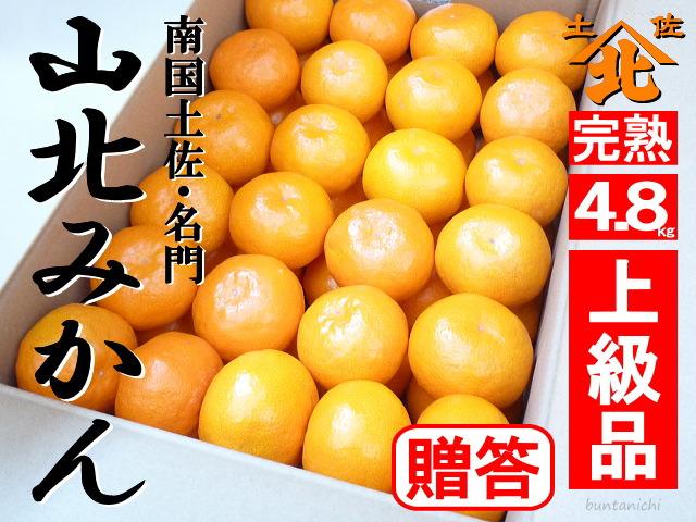 山北みかん商品4.8キロ