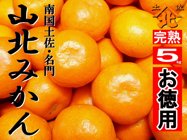 山北みかん640商品5