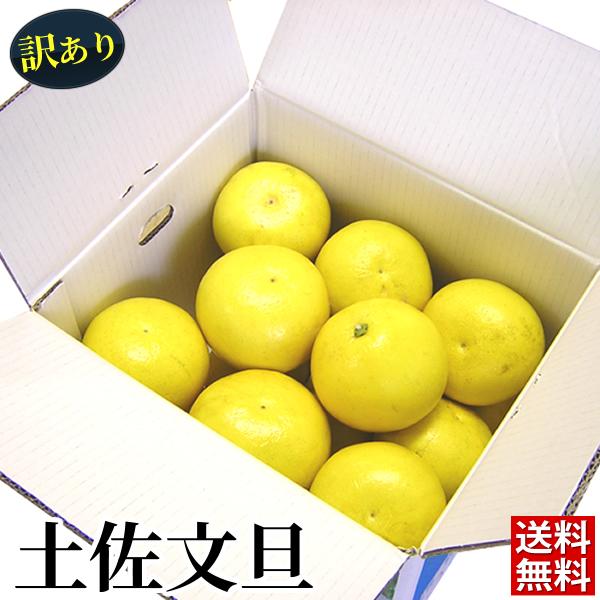 【送料無料】訳あり土佐文旦(露地)10kg サイズ・玉数おまかせ