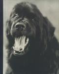 Bruce Weber: Gentle Giants A Book of Newfoundlands