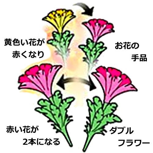 黄色の花にハンカチをかぶせると花はピンクに。そのピンクの花が今度は1本が2本に分裂。なんとも不思議な手品です