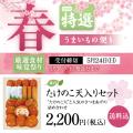 【期間限定】春季節限定商品 たけのこ天入りセット 送料込