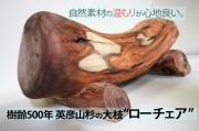樹齢500年英彦山杉大枝 ローチェア 長さ780mm×座面高さ230mm×元口直径330mm~末口直径200mm