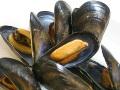 殻付ムール貝(25-35粒/500g) おすすめ! パエリア、ブイヤベース むーる