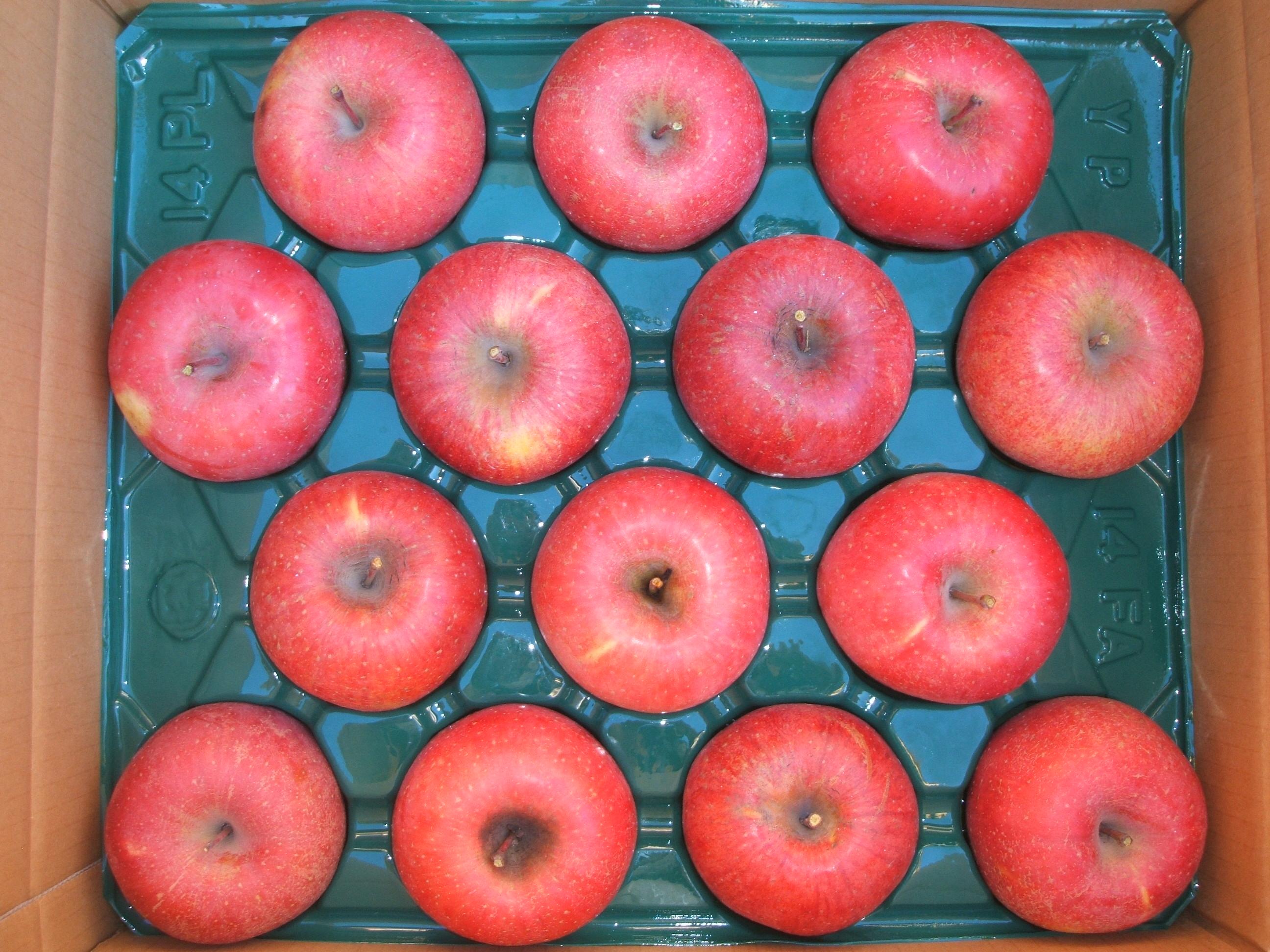 サンふじりんご 10kg 大玉