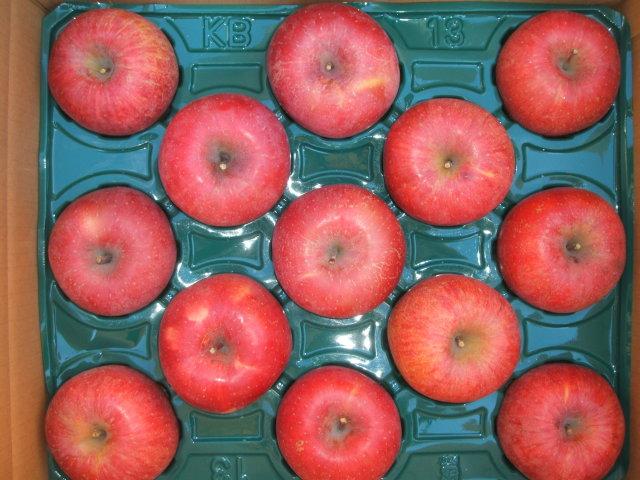 サンふじりんご 10kg 特大玉