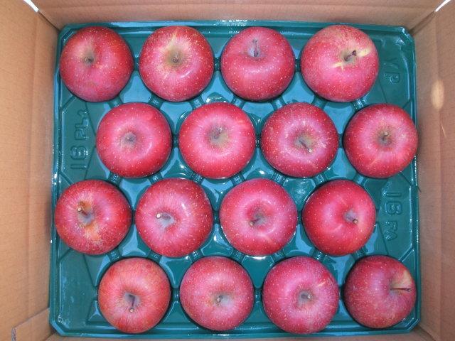 サンふじりんご 【贈答用・中玉・5kg】