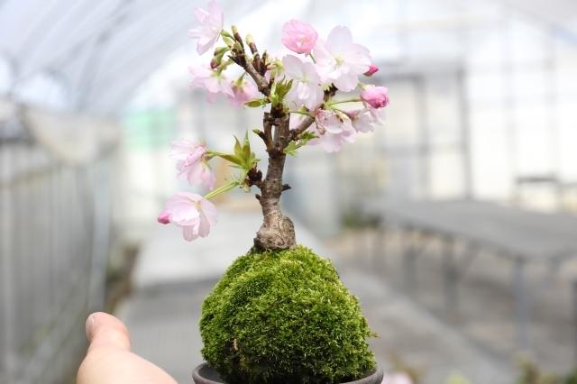 盆栽・サボテン・多肉植物の通販 生産販売専門店 浦部陽向園