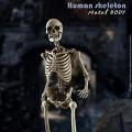 【COO】BS011 1/6 THE HUMAN SKELETON (DIECAST ALLOY) 1/6スケール 金属骨格 メタルボディ 骸骨 スケルトン フィギュア