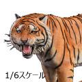 【JxK.Studio】Jxk020A 1/6 yellow Bengal tiger 2.0 1/6スケール ベンガルタイガー 虎 トラ