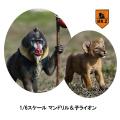 【MR.Z】MRZ035 ratio Mandrillus Sphinx & Lion Cub set 1/6スケール マンドリル&子ライオン