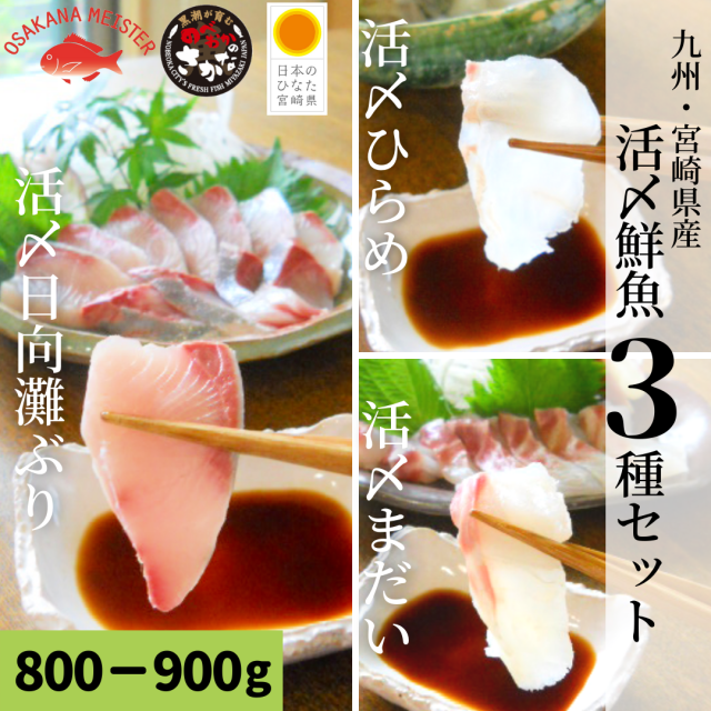【送料無料】活〆鮮魚3種セット 約800-900g(柵)/日向灘ぶり・真鯛・ひらめ