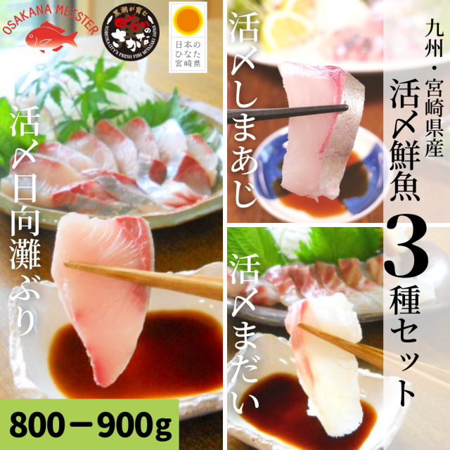 【送料無料】活〆鮮魚3種セット 約800-900g(柵)/日向灘ぶり・真鯛・しまあじ