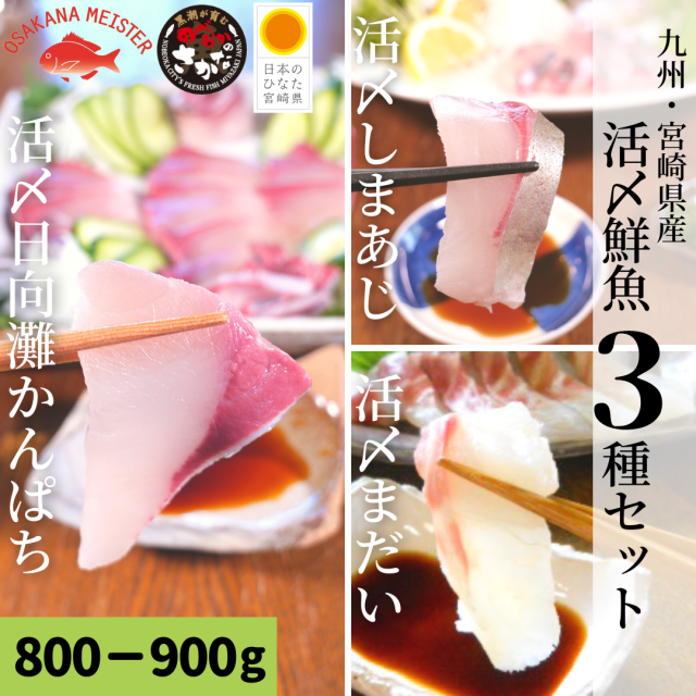 【送料無料】活〆鮮魚3種セット 約800-900g(柵)/日向灘かんぱち・真鯛・しまあじ