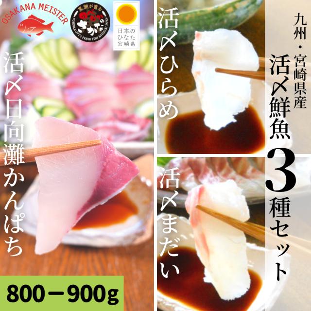 【送料無料】活〆鮮魚3種セット 約800-900g(柵)/日向灘かんぱち・真鯛・ひらめ