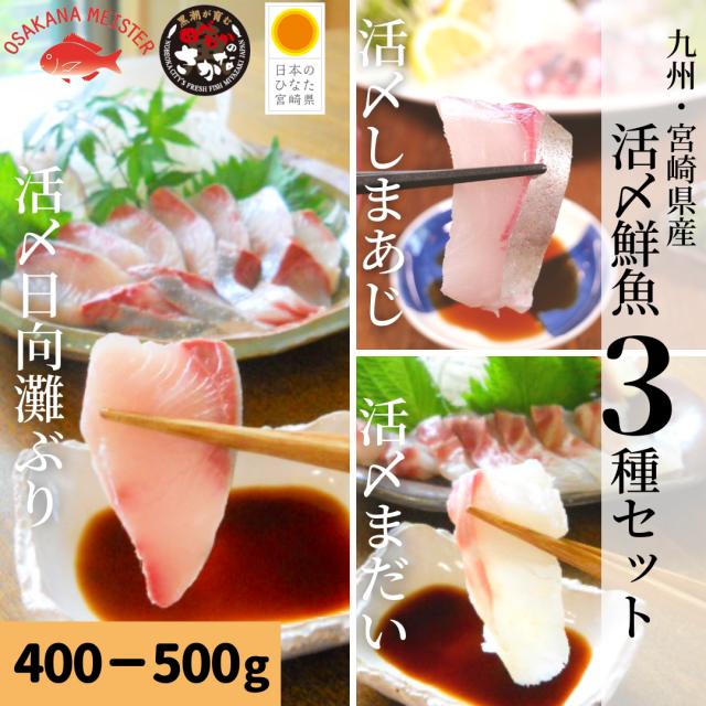 【送料無料】活〆鮮魚3種セット 約400-500g(柵)/日向灘ぶり・真鯛・しまあじ