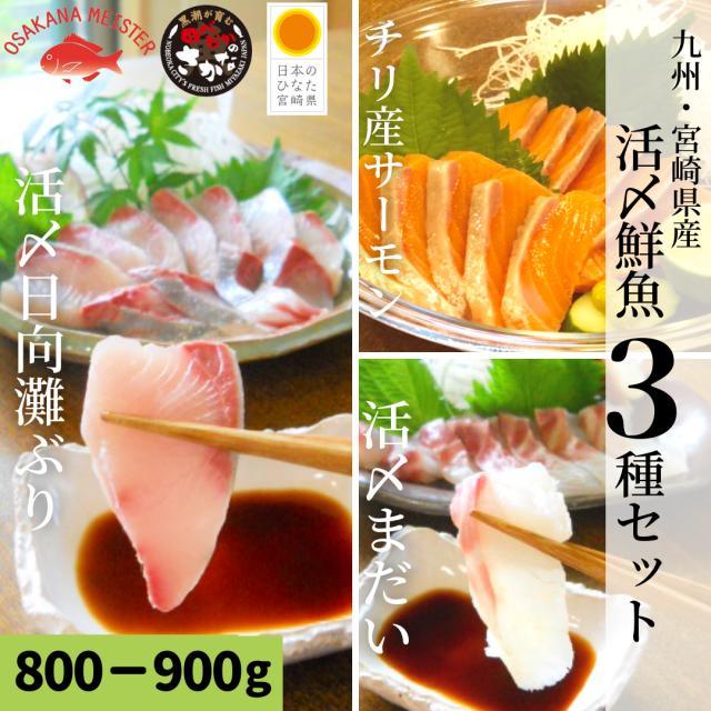 【送料無料】活〆鮮魚3種セット 約800-900g(柵)/日向灘ぶり・真鯛・サーモン