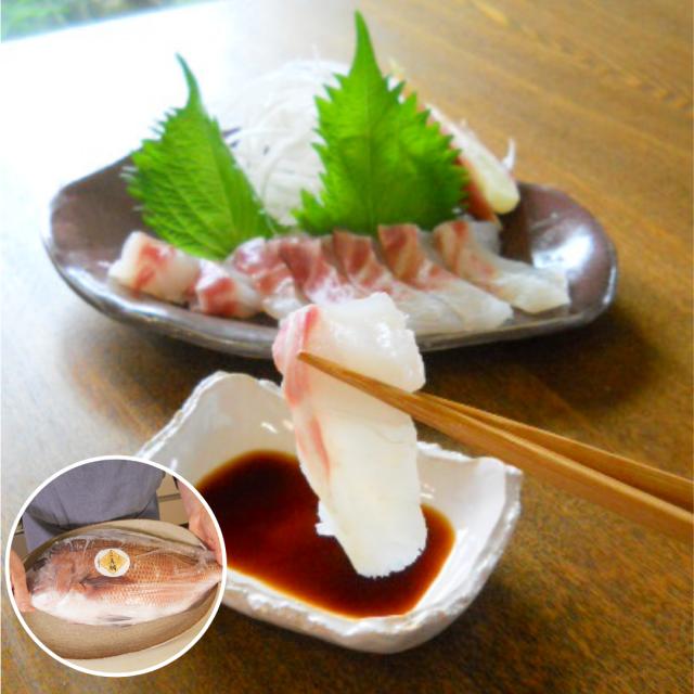 活〆真鯛ラウンド