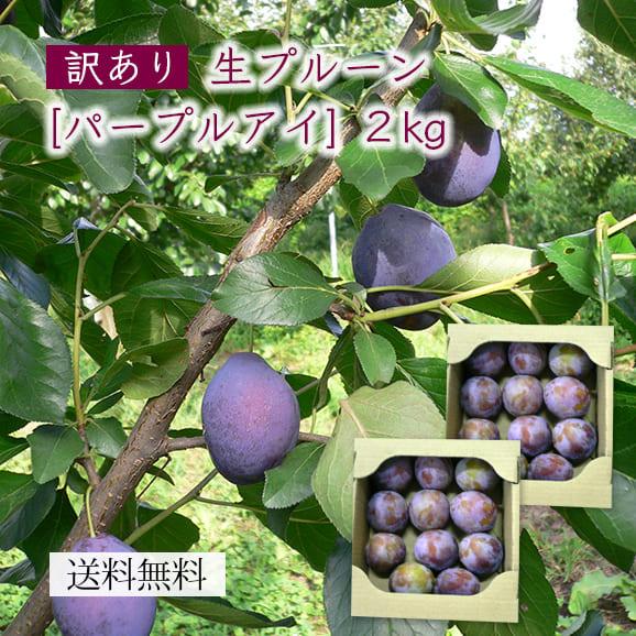 山形産【訳あり】生プルーン[パープルアイ]2kg