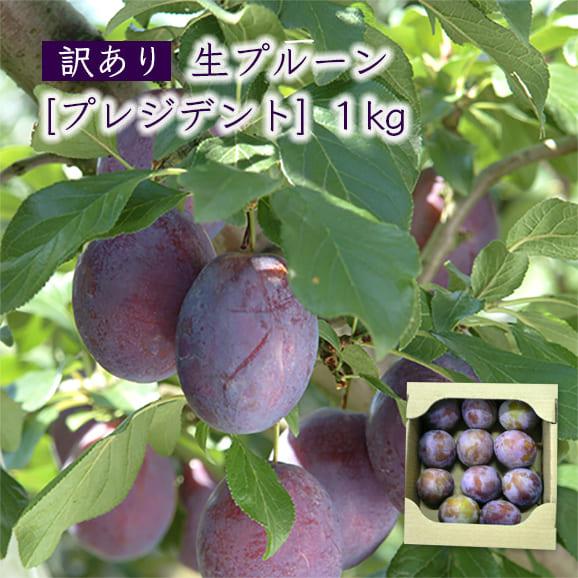 山形産【訳あり】生プルーン[プレジデント]1kg